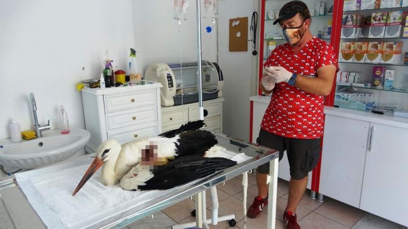 Mehmet Önem  yaralı dişi leyleği tedavi etti