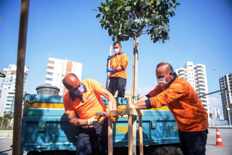 Mersin Büyükşehir Belediyesi, Toroslar'ın kaldırımlarına 175 ağaç fidanı dikti